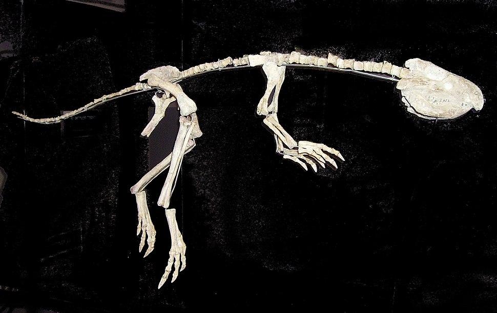 Jeholosaurus 2