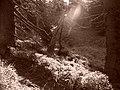 Jeseníky - panoramio (4).jpg