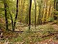 Jesenný les - panoramio.jpg