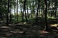 Jesienny spacer - panoramio (15).jpg