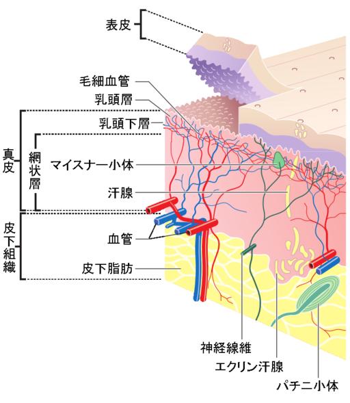 Jpn skin layers