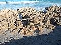 Jupiter FL Coral Cove Park beach04.jpg