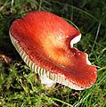Jyväskylä - mushroom 7.jpg