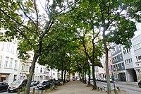 Köln Sudermanstraße Allee.jpg