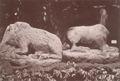 KITLV 87648 - Isidore van Kinsbergen - Sculptures at Tjoepoe in Bandung - Before 1900.tif