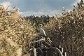Kaņiera ezera laipa.jpg