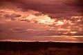 Kalahari landscape, Kalahari, Northern Cape, South Africa (19917505484).jpg