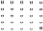 Karyotype of female Nili Ravi buffalo.png