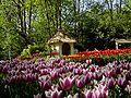 Keukenhof Tulip Gardens 2.JPG