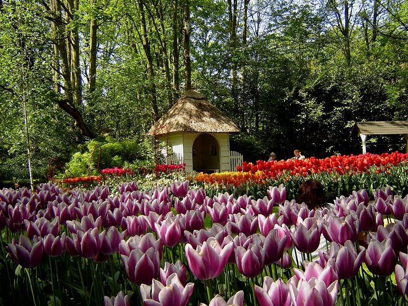 Gambar:Keukenhof Tulip Gardens 2.JPG