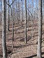 Kings Mountain National Military Park - South Carolina (8558892174) (2).jpg