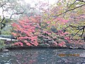 Kobe Municipal Arboretum in 2013-11-16 No,22.JPG
