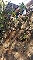 Konkan - Kondhe Village, Chiplun - Part 5 20151223 (23918617891).jpg