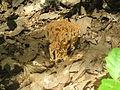 Koralka 3.JPG