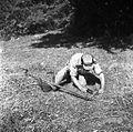 Kosci z Oštrca na Košenicah v Gorjancih 1956 (10).jpg