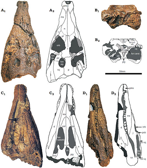 Koumpiodontosuchus