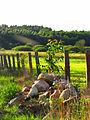 Krajobraz w drodze do Lubiatowa.jpg