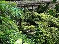 Kuala Lumpur Butterfly Park (2).JPG