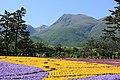 Kuju Flower Park(3553982332).jpg