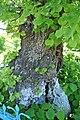 Kurivtsi-Lypa-Franka-15058380.jpg