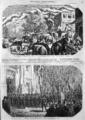 L'Illustration - 1858 - 125.png