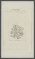 Lacinularia albo-flavicans - - Print - Iconographia Zoologica - Special Collections University of Amsterdam - UBAINV0274 101 04 0004.tif