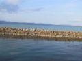 Lago Trasimeno 09.JPG