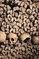 Laika ac Catacombes de Paris (10653246986).jpg