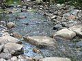 Lake Champlain Fish and Wildlife Resource Office-Great Brook (5726962485).jpg
