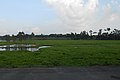 Landscape of Narsingdi District (09).jpg
