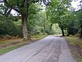 Lane to Stock's Cross from Long Cross, New Forest - geograph.org.uk - 251145.jpg