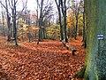 Las bukowy - panoramio.jpg