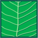 Leaf morphology pinnate.png