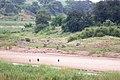 Letaba River (2361403051).jpg