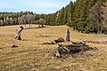 Liebenfels Gößeberg Gummiwiese abgestorbene Bäume Totholz 15032019 6112.jpg