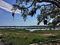 Live oak trees on Bay Street in City of Beaufort, South Carolina.jpg