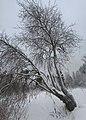 Lobnya, Moscow Oblast, Russia - panoramio (537).jpg