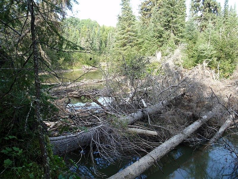 File:Log Jam on Ghost River - panoramio.jpg