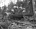 Loggers is the woods, Lester Logging Company, near Montesano, ca 1915 (KINSEY 1962).jpeg