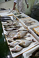 London - Billingsgate Fish Market - 3313.jpg