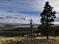 Looking out over the Palouse, October 2017 (2).jpg