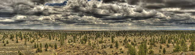 The Lost Forest Research Natural Area, Central Oregon