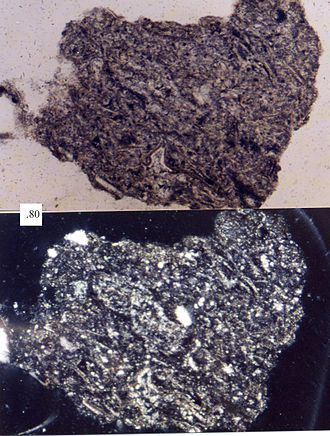 Felsic - A felsic volcanic lithic fragment, as seen in a petrographic microscope.  Scale box is in millimeters.