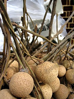 fruit du longanier