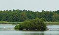 MOs810, WG 2014 39, Milicz Ponds Rudy pond (9).JPG