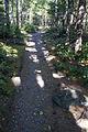 MRNP — Kautz Creek Trail (21257019223) (2).jpg