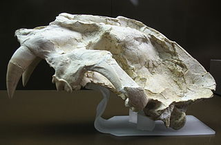 <i>Machairodus</i> genus of mammals (fossil)