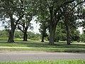 Magazine Street through Audubon Park, New Orleans, 29 June 2020 05.jpg
