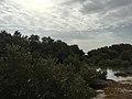 Mangrove 83.jpg