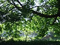 Manorowen through a green shade - geograph.org.uk - 424157.jpg
